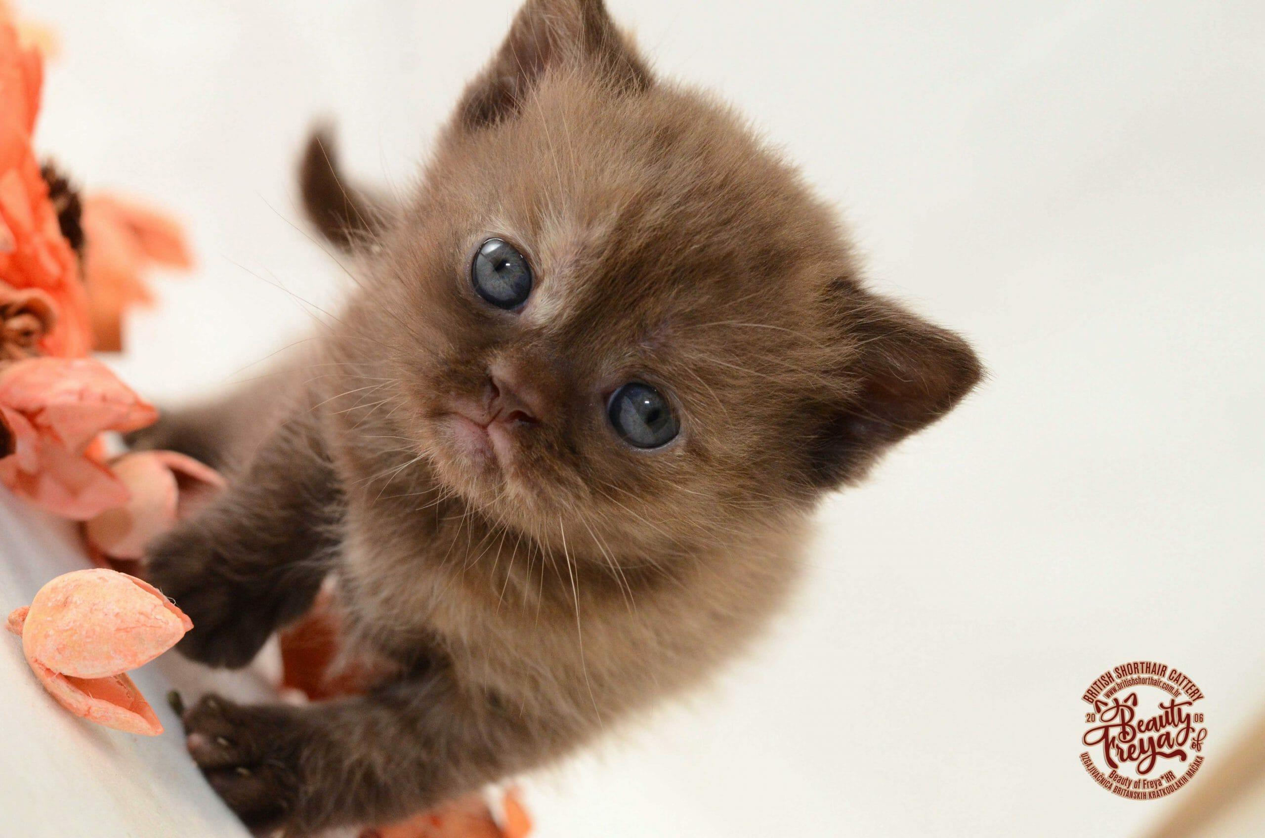 sićušna debela maca naiket djevojke